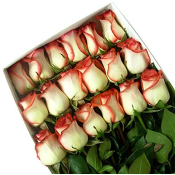 Caja con 18 rosas bicolor flores a domicilio for Plantas a domicilio santiago