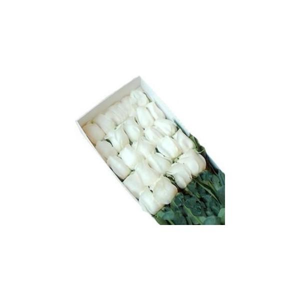 Caja 25 rosas blancas a domicilio enamora con rosas cl for Plantas a domicilio santiago