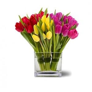 Tulipanes Flores A Domicilio Santiago Providencia Recoleta