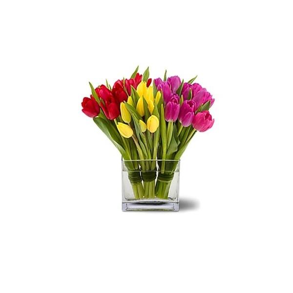 Tulipanes flores a domicilio santiago providencia recoleta for Plantas a domicilio santiago