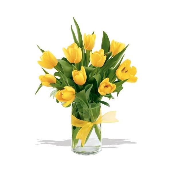 Tulipanes for Plantas a domicilio santiago